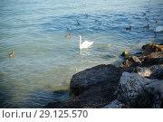 Купить «Beautiful Lake Garda in Italy, sunny summer day. September 7 2018», фото № 29125570, снято 7 сентября 2018 г. (c) Peredniankina / Фотобанк Лори
