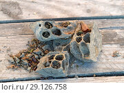Купить «Break a hornet's nest of clay», фото № 29126758, снято 23 февраля 2016 г. (c) Леонид Еремейчук / Фотобанк Лори