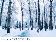 Купить «Winter landscape with snowy trees along the winter park - winter snowy scene in cold tones. Winter landscape with snowfall», фото № 29128518, снято 11 декабря 2017 г. (c) Зезелина Марина / Фотобанк Лори
