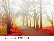Купить «Autumn nature - misty autumn view of autumn park alley in dense fog. Autumn landscape», фото № 29128554, снято 8 ноября 2017 г. (c) Зезелина Марина / Фотобанк Лори