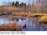 Купить «Осенний пейзаж с болотом», фото № 29137882, снято 26 сентября 2018 г. (c) Икан Леонид / Фотобанк Лори