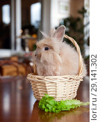 Купить «Funny fluffy rabbit sitting in a basket», фото № 29141302, снято 23 сентября 2018 г. (c) Юлия Кузнецова / Фотобанк Лори