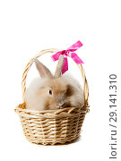 Купить «Easter Bunny in wicker basket isolated on white background», фото № 29141310, снято 23 сентября 2018 г. (c) Юлия Кузнецова / Фотобанк Лори