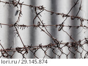 Купить «Rusted barbed wire and fence, close-up», фото № 29145874, снято 6 мая 2018 г. (c) EugeneSergeev / Фотобанк Лори