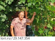 Купить «Мужчина средних лет на дачном участке», эксклюзивное фото № 29147354, снято 23 июля 2011 г. (c) Юрий Морозов / Фотобанк Лори