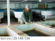 Купить «Woman watching fish in pool on farm», фото № 29149134, снято 4 февраля 2018 г. (c) Яков Филимонов / Фотобанк Лори