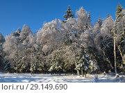 Купить «Зимний пейзаж с лесом в солнечную погоду», фото № 29149690, снято 15 ноября 2016 г. (c) Елена Коромыслова / Фотобанк Лори