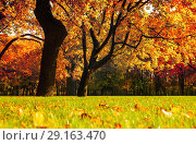 Купить «Autumn picturesque landscape.Autumn trees with yellowed foliage in sunny October park lit by sunlight», фото № 29163470, снято 3 октября 2016 г. (c) Зезелина Марина / Фотобанк Лори
