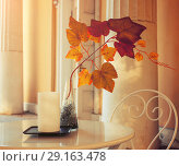 Купить «Autumn background - tree branch with colorful autumn leaves in the vase on the cafe table. Autumn composition», фото № 29163478, снято 3 октября 2016 г. (c) Зезелина Марина / Фотобанк Лори