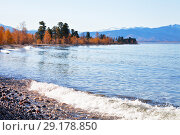 Lake Baikal on a sunny day in September. Waves on a pebble beach against a yellowed coastal forest and snow-capped mountains. Стоковое фото, фотограф Виктория Катьянова / Фотобанк Лори