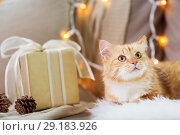 Купить «red tabby cat on sofa with christmas gift at home», фото № 29183926, снято 15 ноября 2017 г. (c) Syda Productions / Фотобанк Лори