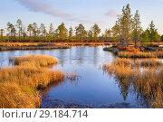 Купить «Болото поздней осенью», фото № 29184714, снято 5 октября 2018 г. (c) Икан Леонид / Фотобанк Лори