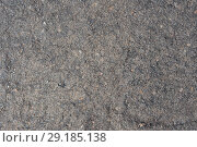 Купить «Поверхность вулканического камня», фото № 29185138, снято 12 сентября 2018 г. (c) А. А. Пирагис / Фотобанк Лори