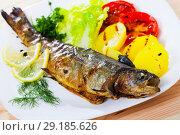 Купить «Grilled trout with vegetable garnish», фото № 29185626, снято 22 октября 2018 г. (c) Яков Филимонов / Фотобанк Лори