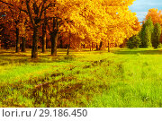 Купить «Autumn landscape. Golden park trees and flooded lawn in the autumn park in sunny weather. Colorful autumn nature scene», фото № 29186450, снято 4 августа 2017 г. (c) Зезелина Марина / Фотобанк Лори