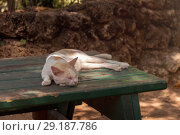 A domestic cat is laying on old wooden table. A pet in nature. The village, the park. Стоковое фото, фотограф Максим Бейков / Фотобанк Лори