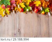 Купить «Autumn background. Maple varicolored autumn leaves on the wooden background», фото № 29188994, снято 11 октября 2017 г. (c) Зезелина Марина / Фотобанк Лори