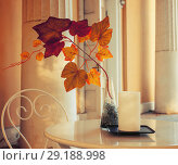 Купить «Fall background - tree branch with colorful fall leaves in the vase on the cafe table. Fall composition», фото № 29188998, снято 3 октября 2016 г. (c) Зезелина Марина / Фотобанк Лори