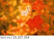 Купить «Red maple leaf with water drops on the glass», фото № 29207354, снято 27 сентября 2018 г. (c) Валерий Смирнов / Фотобанк Лори