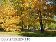 Купить «Золотая осень в городском парке», фото № 29224110, снято 12 октября 2018 г. (c) Елена Коромыслова / Фотобанк Лори