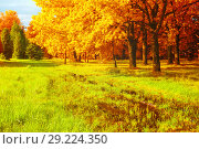 Купить «Fall landscape. Golden park trees and flooded lawn in the fall park in sunny weather. Colorful fall nature scene», фото № 29224350, снято 4 августа 2017 г. (c) Зезелина Марина / Фотобанк Лори