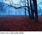 Купить «Autumn colorful November foggy landscape. Deserted autumn park with bare trees and dry fallen red autumn leaves, mysterious autumn nature scene», фото № 29224354, снято 8 ноября 2017 г. (c) Зезелина Марина / Фотобанк Лори