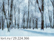Купить «Winter landscape with snowy trees along the winter park - winter snowy scene in cold tone», фото № 29224366, снято 11 декабря 2017 г. (c) Зезелина Марина / Фотобанк Лори
