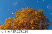 Купить «Autumn trees with yellowing leaves against the sky», видеоролик № 29235226, снято 29 сентября 2018 г. (c) Игорь Жоров / Фотобанк Лори