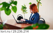 Купить «Female worker typing the text on laptop in the office, plants on the table», видеоролик № 29236214, снято 17 октября 2018 г. (c) Константин Шишкин / Фотобанк Лори