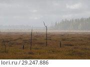 Купить «Мертвый лес на болоте», фото № 29247886, снято 28 сентября 2018 г. (c) Яковлев Сергей / Фотобанк Лори
