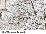 Купить «Trees under a thick layer of snow on the background of high-rise buildings in the snowfall», фото № 29249222, снято 10 февраля 2018 г. (c) Tetiana Chugunova / Фотобанк Лори