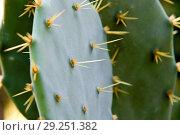 Купить «Succulent plants», фото № 29251382, снято 4 октября 2009 г. (c) age Fotostock / Фотобанк Лори