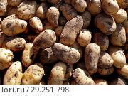 Купить «Vegetables, potatoes», фото № 29251798, снято 9 ноября 2008 г. (c) age Fotostock / Фотобанк Лори