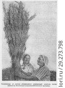 Купить «Колхозницы со снопом одновременно созревающей конопли, экспонатом на Всесоюзную сельскохозяйственную выставку», иллюстрация № 29273798 (c) Макаров Алексей / Фотобанк Лори