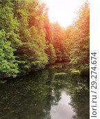 Купить «Swampy pond with duckweed in the park. Summer landscape.», фото № 29274674, снято 9 июля 2018 г. (c) Евгений Ткачёв / Фотобанк Лори