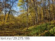 Купить «Осенний пейзаж с деревьями растущими на бугре», эксклюзивное фото № 29275186, снято 15 октября 2018 г. (c) Игорь Низов / Фотобанк Лори