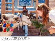 Купить «Young woman looking at the camel, laughing, beside Arabic young man», фото № 29279014, снято 9 октября 2016 г. (c) Tetiana Chugunova / Фотобанк Лори