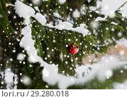 Купить «red christmas ball on fir tree branch with snow», фото № 29280018, снято 11 ноября 2016 г. (c) Syda Productions / Фотобанк Лори
