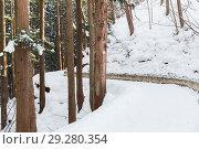 Купить «snow path in winter forest, japan», фото № 29280354, снято 8 февраля 2018 г. (c) Syda Productions / Фотобанк Лори