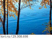 Купить «Осенний яркий пейзаж с березами над рекой», фото № 29308698, снято 17 октября 2018 г. (c) Татьяна Белова / Фотобанк Лори