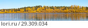 Купить «Beautiful panoramic view of the bank of the Irkut River with yellowed trees in the coastal forest on an autumn windy sunny day», фото № 29309034, снято 29 сентября 2018 г. (c) Виктория Катьянова / Фотобанк Лори