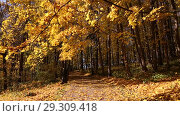 Купить «Листопад в осеннем парке», видеоролик № 29309418, снято 26 октября 2018 г. (c) Наталья Волкова / Фотобанк Лори