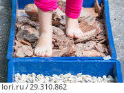 "Купить «Children walk barefoot along the ""trail of hardening"" with pebbles, sawdust, straw.», фото № 29310862, снято 21 июля 2018 г. (c) Акиньшин Владимир / Фотобанк Лори"