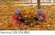 Купить «Autumn. Small children in the yellow leaves. Children play in the street with fallen leaves. Autumn grove of birches and maples. Boys throw up fallen leaves of trees in the top. Children sit across from each other on a carpet of yellow leaves and throw leaves into each other. Happy kids on the street», видеоролик № 29316882, снято 22 марта 2019 г. (c) Константин Мерцалов / Фотобанк Лори