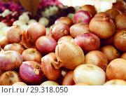 Купить «Different onion varieties», фото № 29318050, снято 22 октября 2017 г. (c) Яков Филимонов / Фотобанк Лори