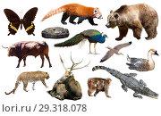 Купить «animal collection asia», фото № 29318078, снято 22 января 2019 г. (c) Яков Филимонов / Фотобанк Лори