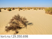 Купить «Landscape of the Western desert Sahara, Egypt», фото № 29350698, снято 26 декабря 2008 г. (c) Знаменский Олег / Фотобанк Лори