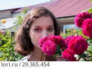 Купить «Portrait of a beautiful brunette in red rose bushes at summer cottage», фото № 29365454, снято 7 июля 2018 г. (c) Катерина Белякина / Фотобанк Лори