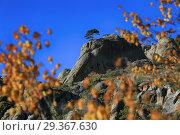 Купить «Сосна на скалах в горах Демерджи в окружении желтых листьев на фоне неба», фото № 29367630, снято 12 октября 2018 г. (c) Яна Королёва / Фотобанк Лори