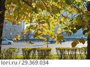 Купить «Осенние желтеющие листья с плодами на ветвях липы. Крупным планом на фоне проспекта Мира в Москве», эксклюзивное фото № 29369034, снято 15 октября 2018 г. (c) Кузин Алексей / Фотобанк Лори
